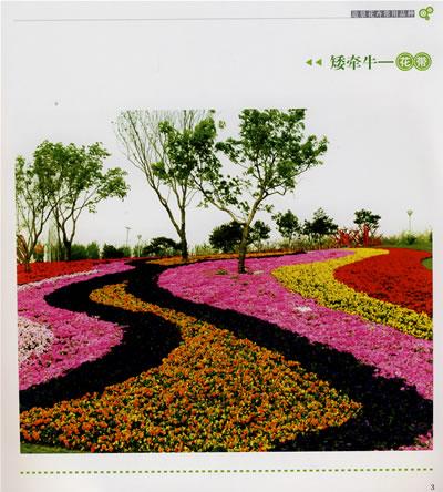 2015 园林花卉应用