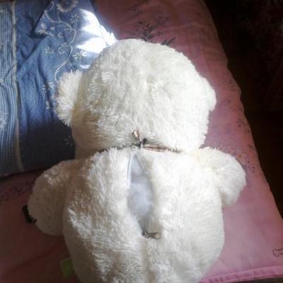 棕熊和老虎图片_棕熊简笔画图片