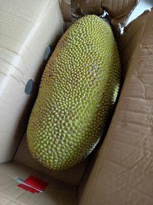 百度菠萝风景美图