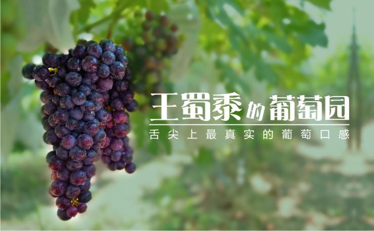 王蜀黍的葡萄园  舌尖上最真实的葡萄口感