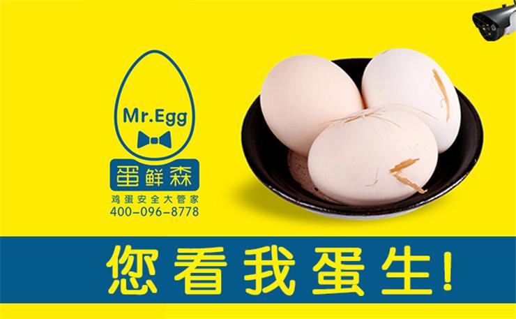 蛋鲜森林间可视化散养鸡蛋