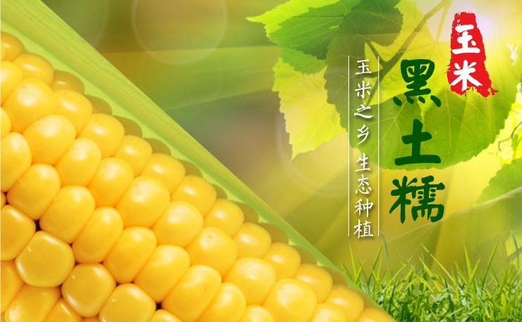 黑土糯 玉米尝鲜  生态精致粗粮