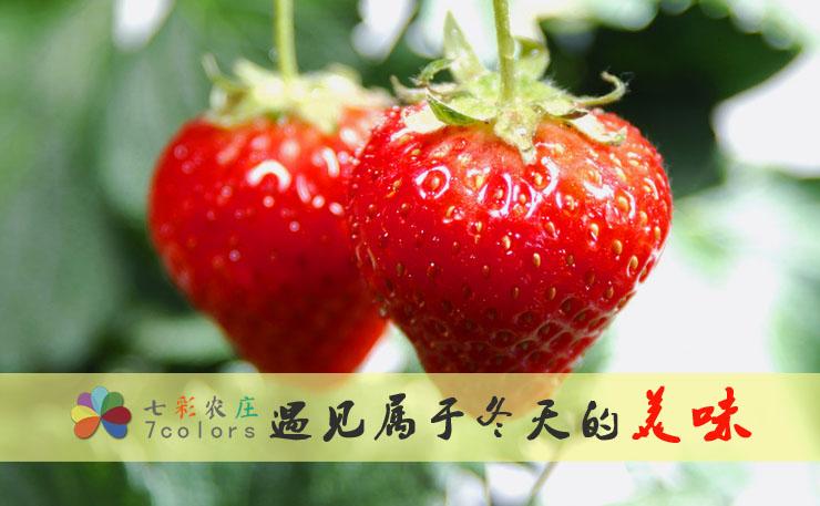 遇见草莓,遇见冬天里的美味