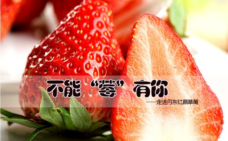"""不能""""莓""""有你—丹东99红颜草莓"""