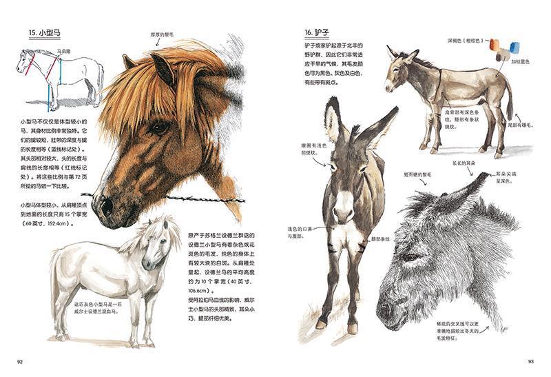 正版书籍 世界绘画经典教程:尼斯动物绘画专业技法(修订版) [美]克劳