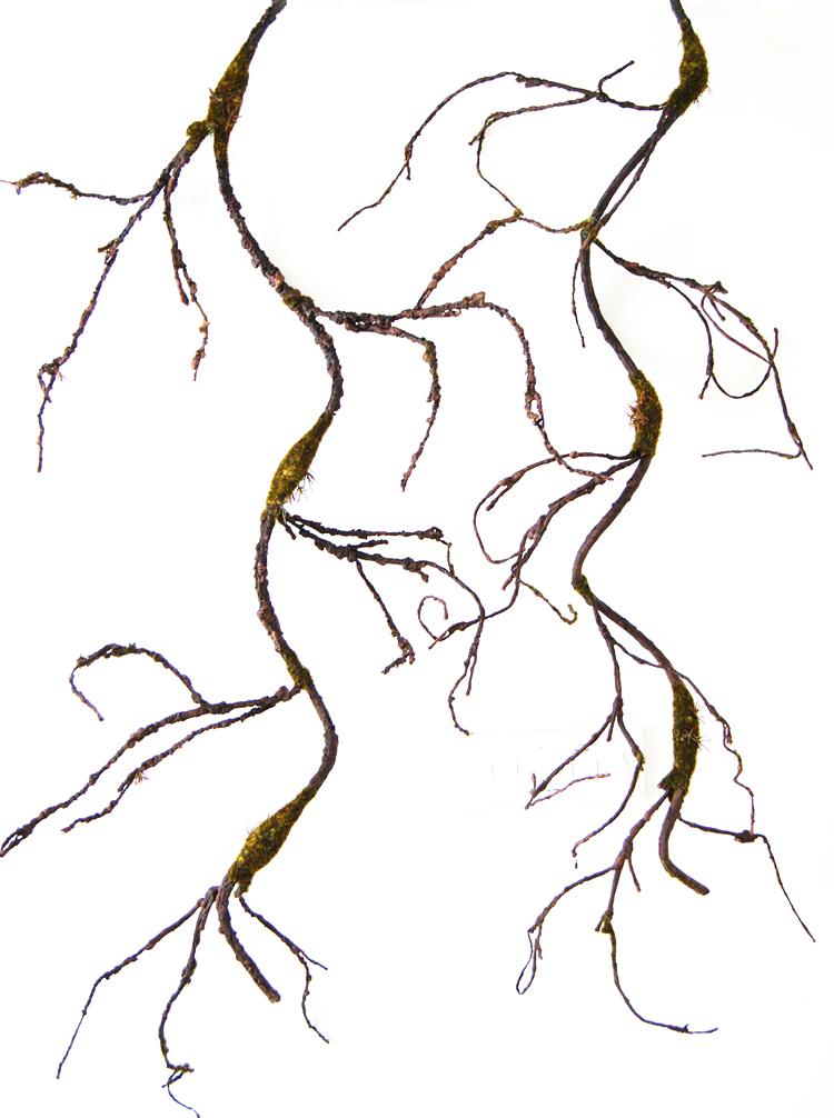 树枝分叉矢量图