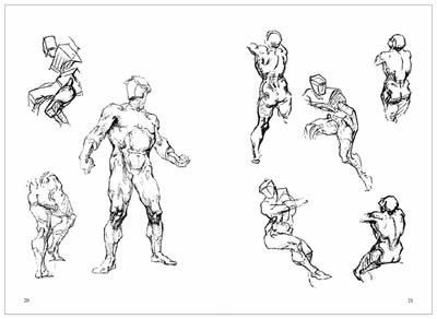 伯里曼肌肉_伯里曼人体结构教学