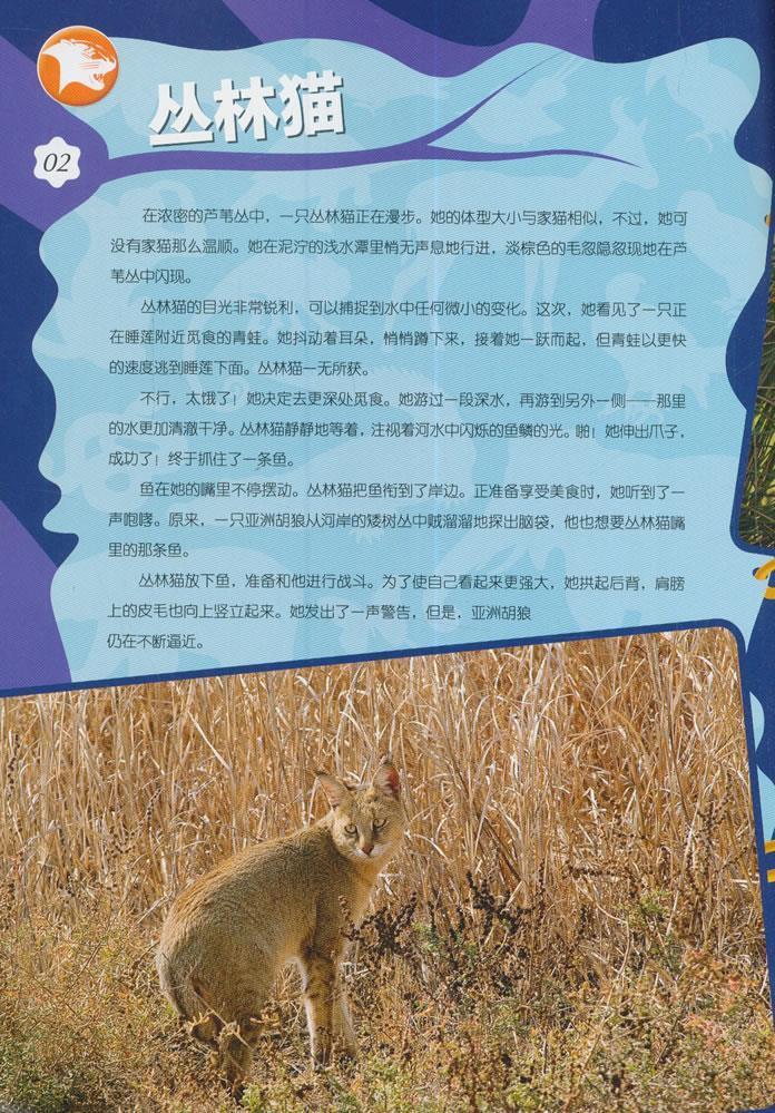 食物链大揭秘指南欢迎来到尼罗河丛林猫缟鬣狗白头硬尾鸭纸莎草白