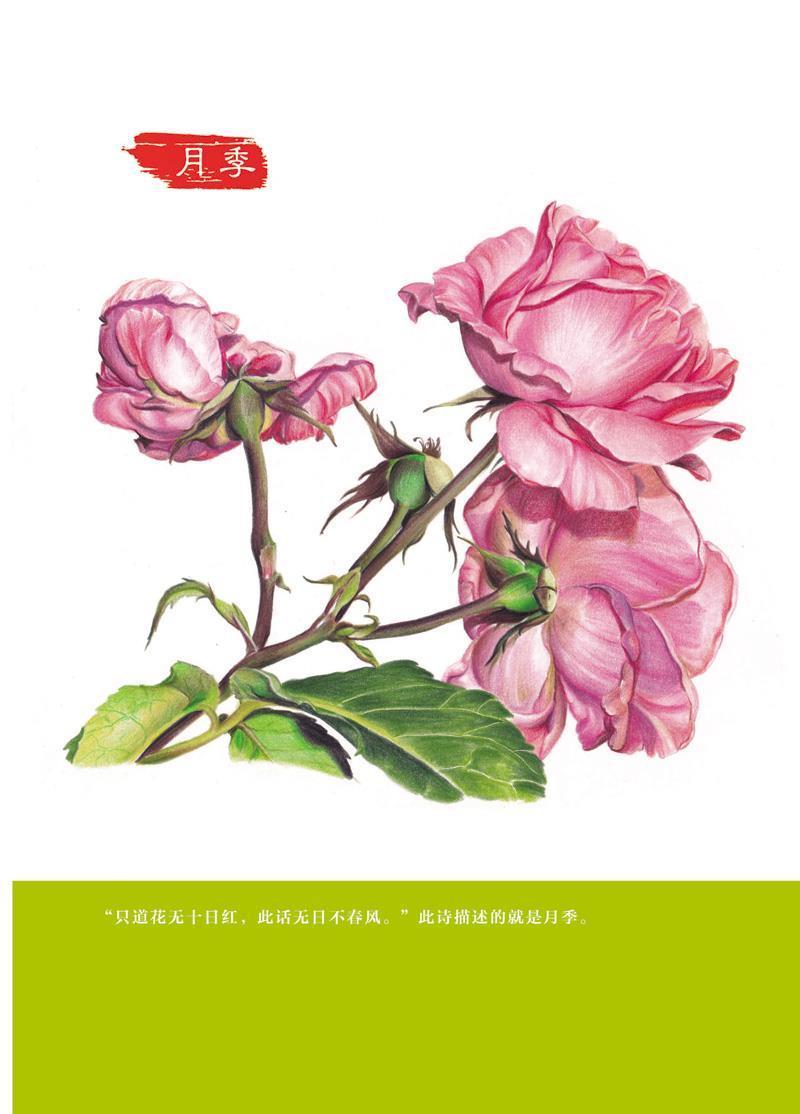 正版包邮 彩铅花绘开 超细腻的彩铅花卉绘制宝典(全彩) 小米与石石