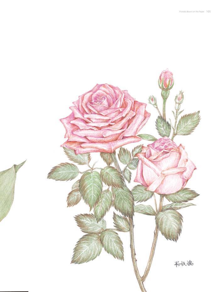 正版包邮 花儿绘开---花卉彩铅经典步骤详解 文静 湖北美术出版社