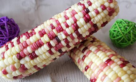 五谷杂粮 玉米种子 花糯玉米 粘玉米 水果玉米种子 菜园种植图片