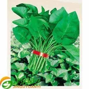 扇贝旗舰店】蔬菜种子泰国空心菜做法蕹菜大鹅肝蒸大全种子园艺图片