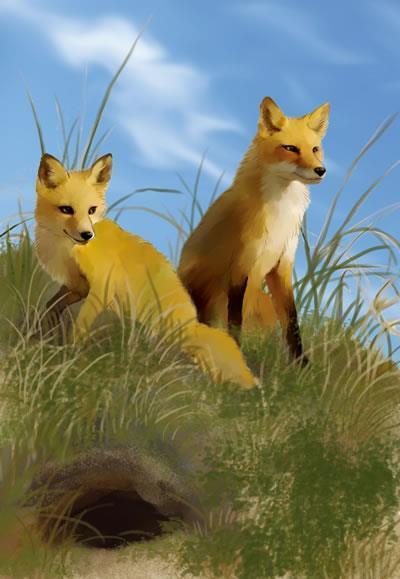 123 倔小孩动物小说之火狐