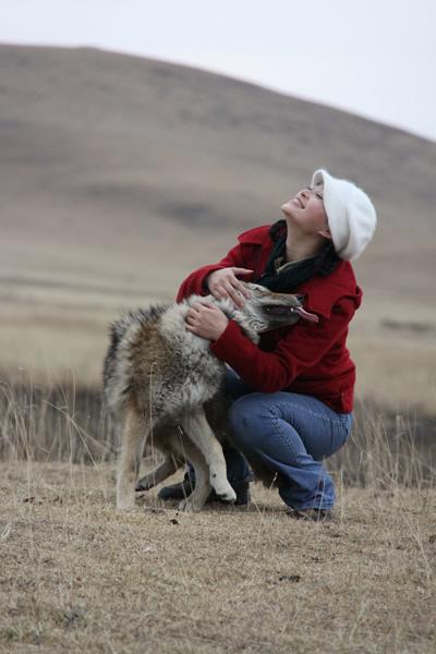 """重返狼群(《狼图腾》中小狼""""复活"""",世界首例个人成功放养狼的纪实文学图片"""