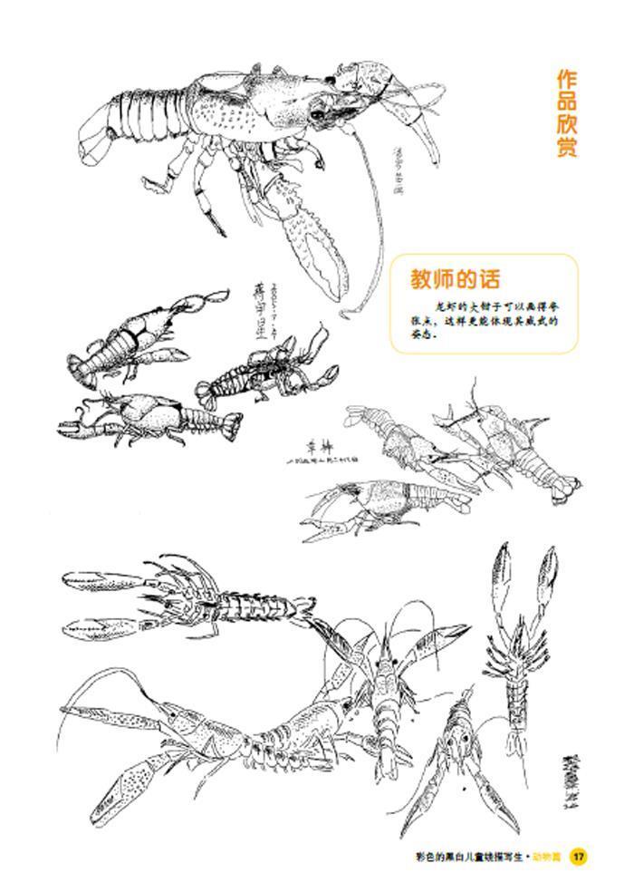 正版包邮 彩色的黑白-儿童线描画写生-动物篇 朱玉婷,方丽丹 湖北美术