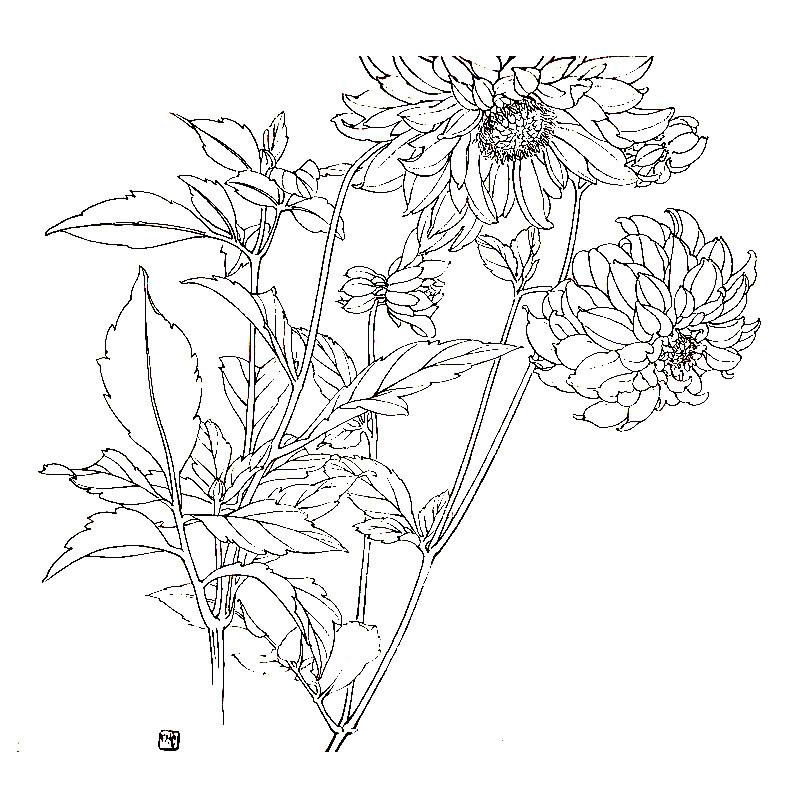 美女梨花手绘图片