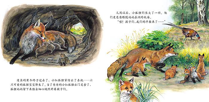 万卷博览2015年跟随小动物的足迹《小狐狸历险记》(全套12册)(法国)