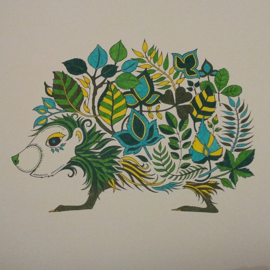 彩铅手绘动植物