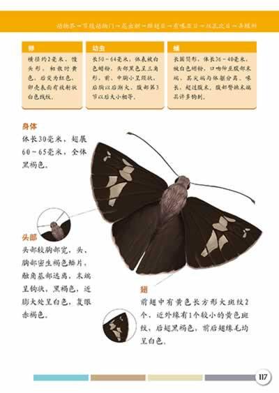 昆虫图鉴(高清手绘图片,从法布尔《昆虫记》走出来的活生生的标本)