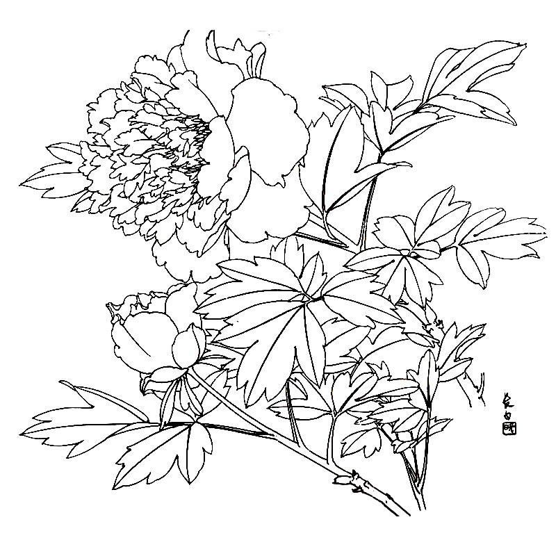 桃花枝手绘图片